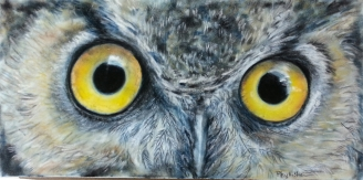 Great Horned Owl nfs
