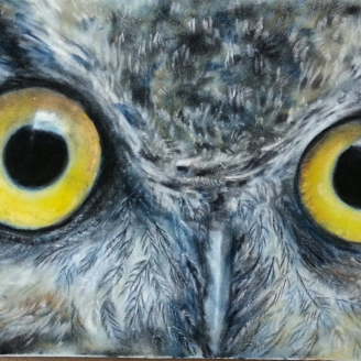 Great Horned Owl nfs