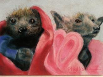 Two Bats in A Blanket $250