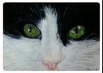 Kitty Kat #1
